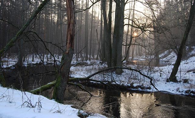 wyprawy-na-ryby-z-przewodnikiem-www.przewodnicywedkarscy.pl-pstrąg.jpg