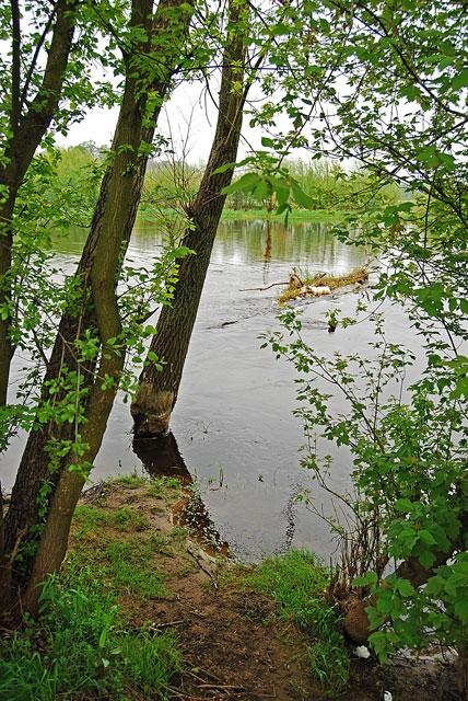 wyprawy-na-ryby-z-przewodnikiem-www.przewodnicywedkarscy.pl-narew.jpg
