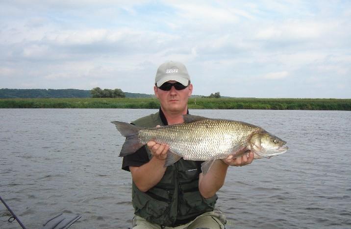 32 - boleń - www.przewodnicywedkarscy.pl - wyprawy na ryby.jpg