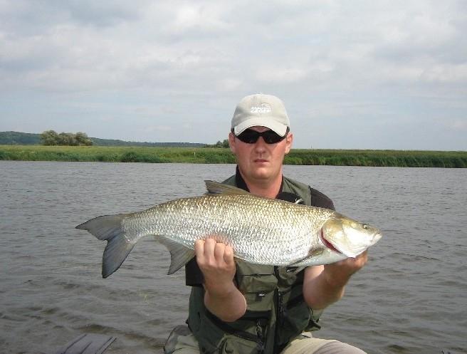 34 - boleń - www.przewodnicywedkarscy.pl - wyprawy na ryby.jpg