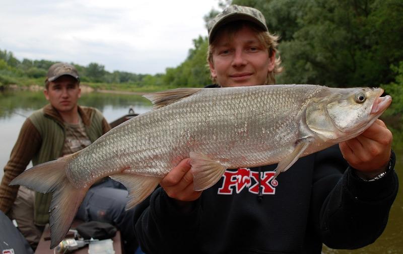 36 - boleń - www.przewodnicywedkarscy.pl - wyprawy na ryby.jpg