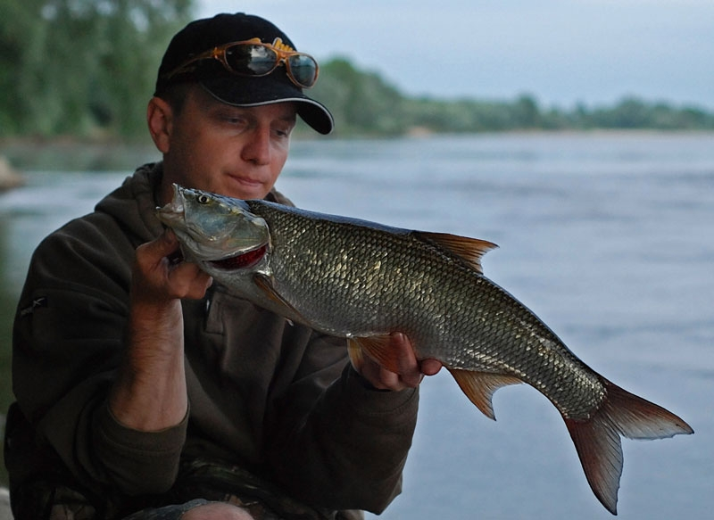 38 - boleń - www.przewodnicywedkarscy.pl - wyprawy na ryby.jpg