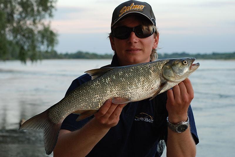 39 - boleń - www.przewodnicywedkarscy.pl - wyprawy na ryby.jpg