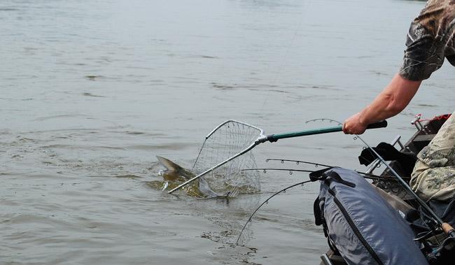 3_0 - boleń - www.przewodnicywedkarscy.pl - wyprawy na ryby.jpg
