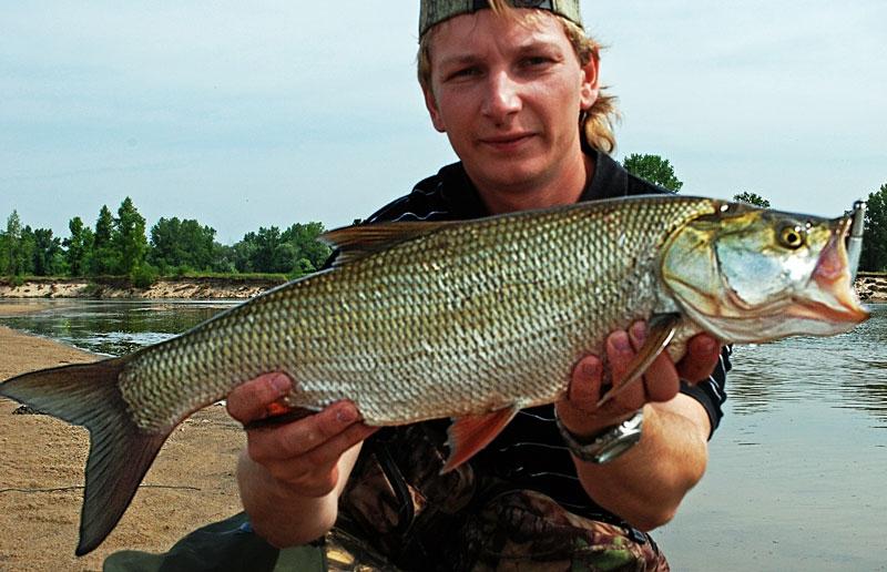 42 - boleń - www.przewodnicywedkarscy.pl - wyprawy na ryby.jpg
