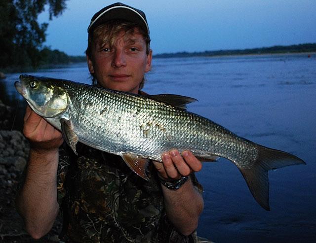 44 - boleń - www.przewodnicywedkarscy.pl - wyprawy na ryby.jpg