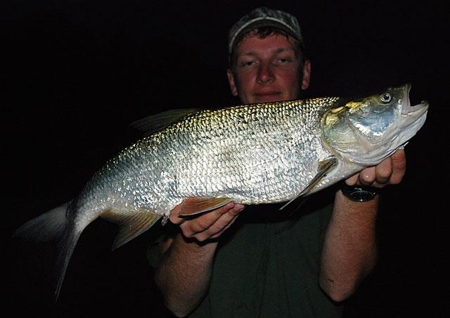 56 - boleń - www.przewodnicywedkarscy.pl - wyprawy na ryby.jpg
