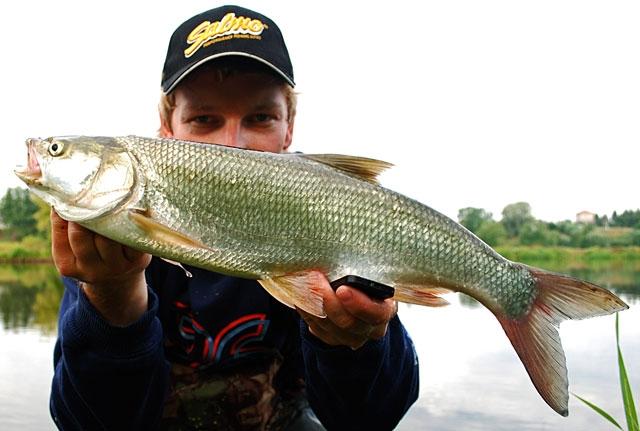 57 - boleń - www.przewodnicywedkarscy.pl - wyprawy na ryby.jpg