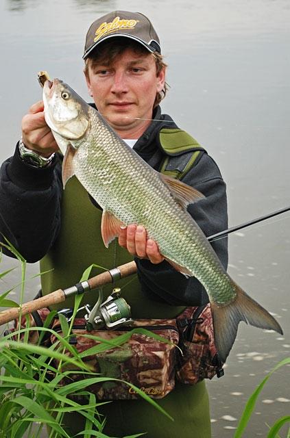 bolen-pion - boleń - www.przewodnicywedkarscy.pl - wyprawy na ryby.jpg