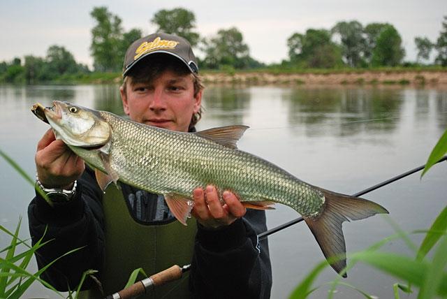 bolen - boleń - www.przewodnicywedkarscy.pl - wyprawy na ryby.jpg