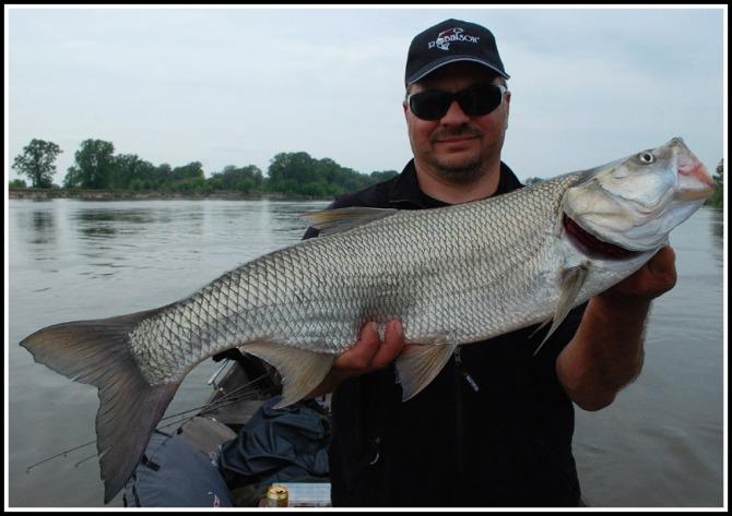 bolen_adam_przykosa_poziom_male - boleń - www.przewodnicywedkarscy.pl - wyprawy na ryby.jpg
