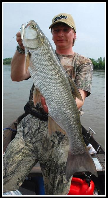 bolen_mateo_thrill3 - boleń - www.przewodnicywedkarscy.pl - wyprawy na ryby.jpg
