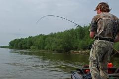 hol-bolen - boleń - www.przewodnicywedkarscy.pl - wyprawy na ryby.jpg