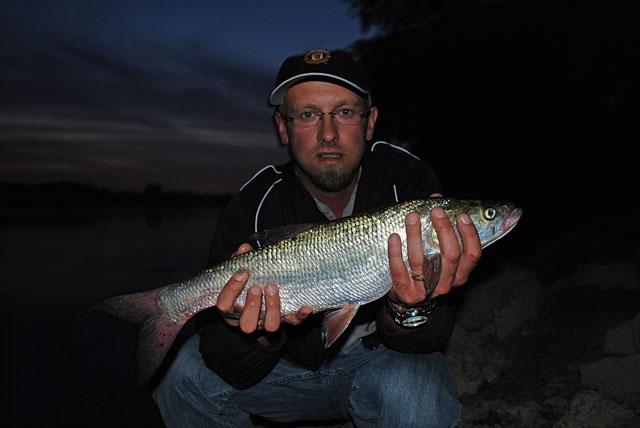 marek-bolo - boleń - www.przewodnicywedkarscy.pl - wyprawy na ryby.jpg