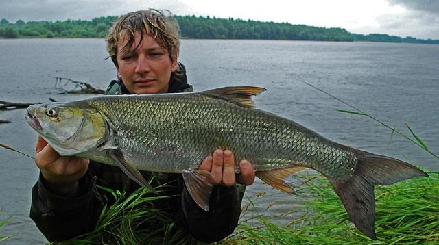 mat-bolen - boleń - www.przewodnicywedkarscy.pl - wyprawy na ryby.jpg