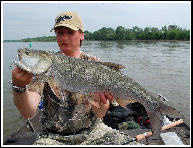 mateo_bolen_75cm_maj_2009 - boleń - www.przewodnicywedkarscy.pl - wyprawy na ryby.jpg