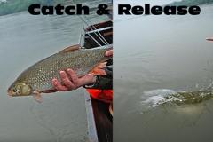 catch-release-1.jpg