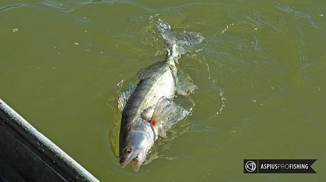ebro-wyprawy-na-ryby-wwwprzewodnicywedkarscy-10.jpg