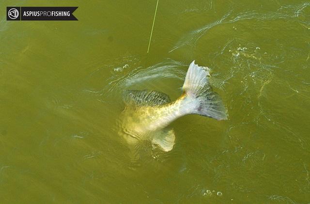 ebro-wyprawy-na-ryby-wwwprzewodnicywedkarscy-14.jpg