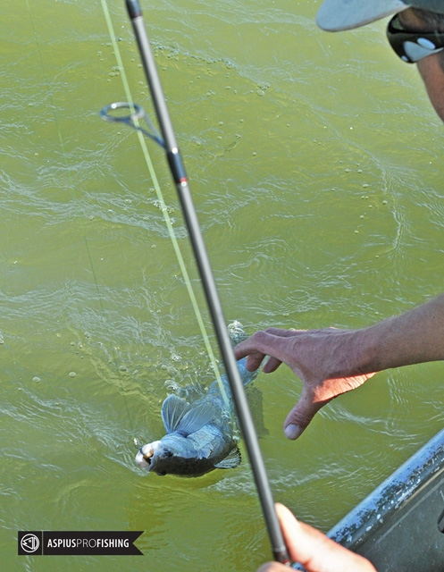 ebro-wyprawy-na-ryby-wwwprzewodnicywedkarscy-20.jpg
