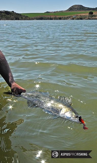 ebro-wyprawy-na-ryby-wwwprzewodnicywedkarscy-24.jpg
