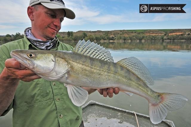 ebro-wyprawy-na-ryby-wwwprzewodnicywedkarscy-32.jpg
