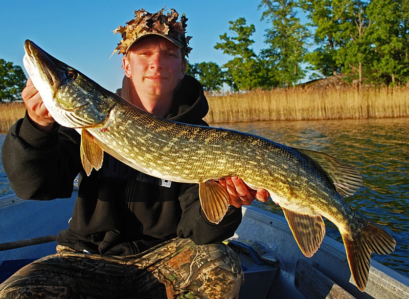 80 - szczupak - www.przewodnicywedkarscy.pl - wyprawy na ryby.jpg
