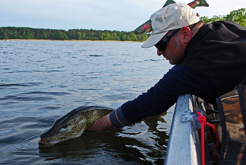 cr_0 - szczupak - www.przewodnicywedkarscy.pl - wyprawy na ryby.jpg