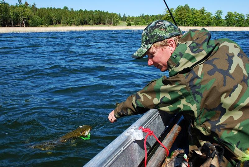 fala - szczupak - www.przewodnicywedkarscy.pl - wyprawy na ryby.jpg