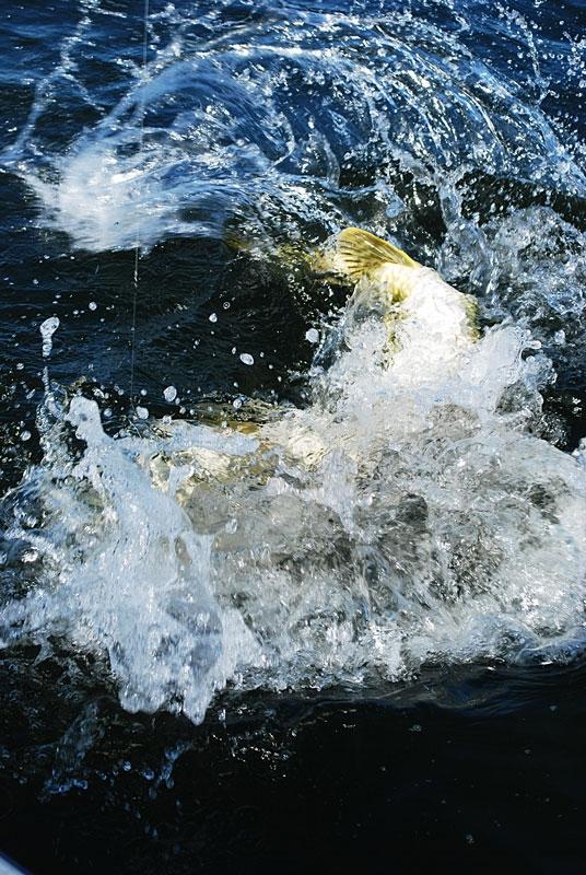 kociol-2 - szczupak - www.przewodnicywedkarscy.pl - wyprawy na ryby.jpg
