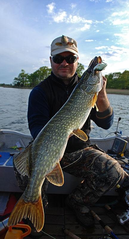 pike - szczupak - www.przewodnicywedkarscy.pl - wyprawy na ryby.jpg