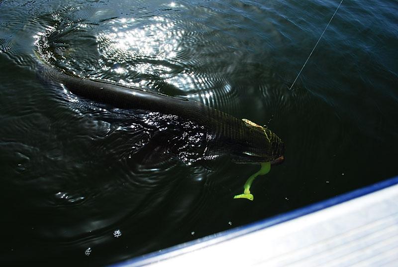 przy-burcie - szczupak - www.przewodnicywedkarscy.pl - wyprawy na ryby.jpg
