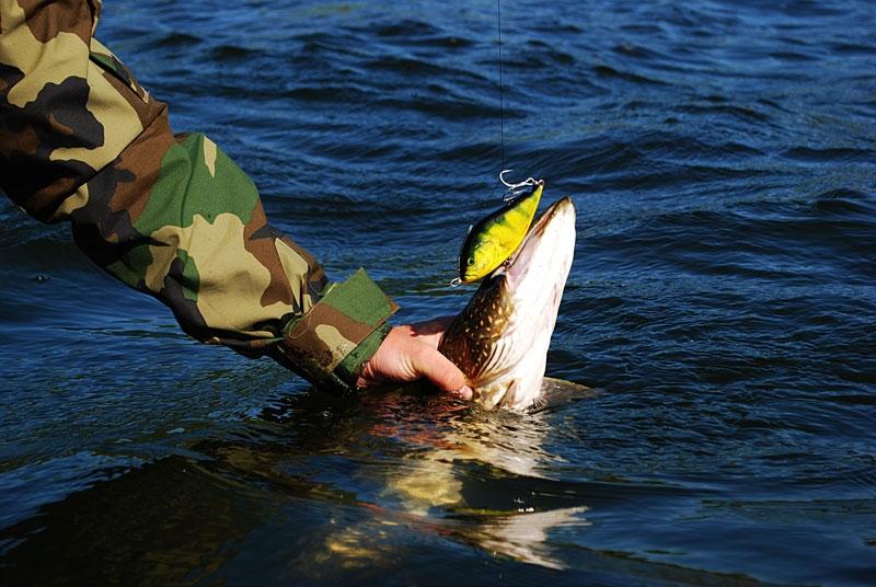 slider -- szczupak - www.przewodnicywedkarscy.pl - wyprawy na ryby.jpg