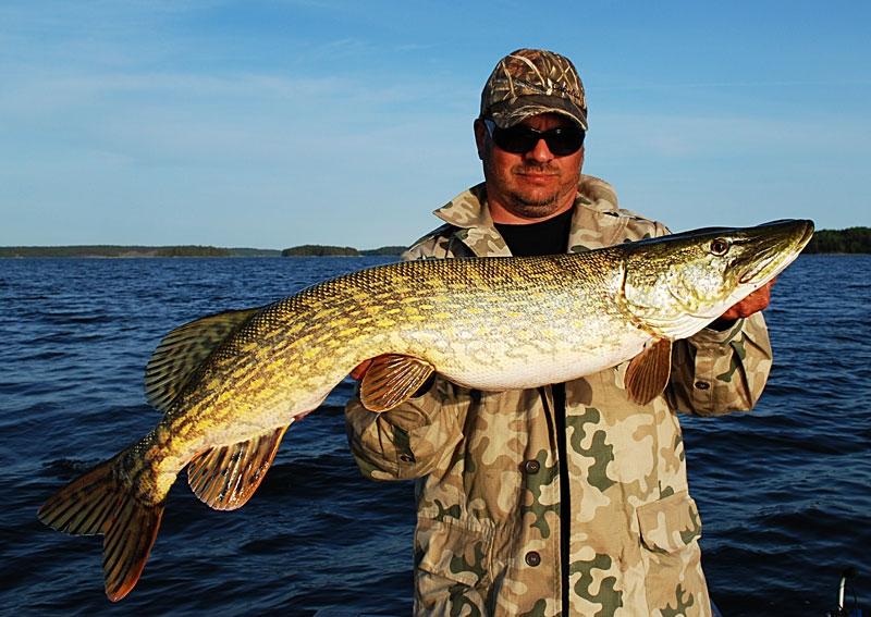 szczupak-105-a_0 - szczupak - www.przewodnicywedkarscy.pl - wyprawy na ryby.jpg