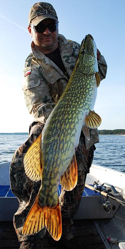 szczupak-105cm - szczupak - www.przewodnicywedkarscy.pl - wyprawy na ryby.jpg