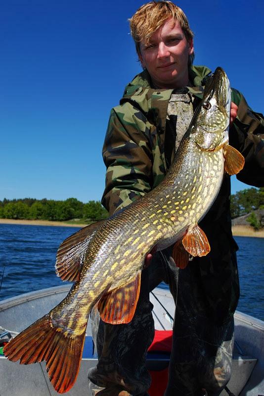 szczupak-97cm - szczupak - www.przewodnicywedkarscy.pl - wyprawy na ryby.jpg