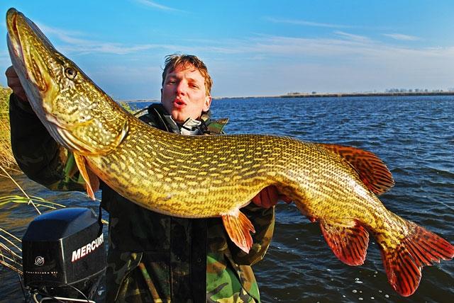 szczupak-mat-124 - szczupak - www.przewodnicywedkarscy.pl - wyprawy na ryby.jpg