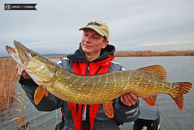 wyprawy-na-ryby-z-przewodnikiem-wwwprzewodnicywedkarscypl-rugia-szczupaki.jpg