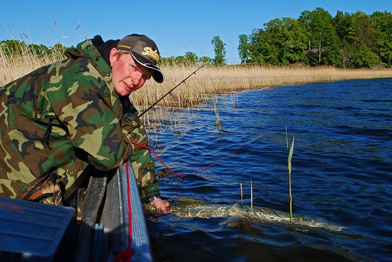 wypusc - szczupak - www.przewodnicywedkarscy.pl - wyprawy na ryby.jpg