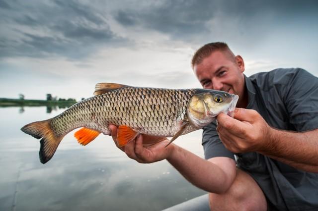 Odra - www.przewodnicywedkarscy.pl - Wyprawy na ryby z przewodnikiem