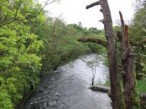 ashford-river41