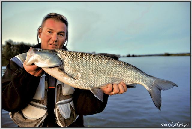 odra - www.przewodnicywedkarscy.pl - wyprawy na ryby - boleń - 01