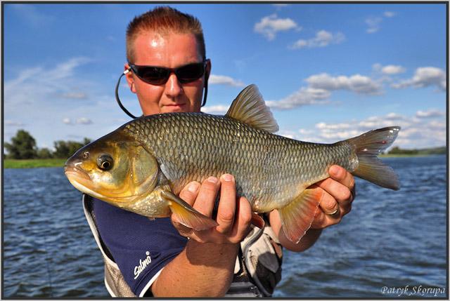 umawiać się z dużą ilością ryb datowanie karabinów Winchester według numeru seryjnego