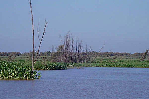 Rozlewisko - Argentyna - Las Termas Rio Hondo - Dorada - www.przewodnicywedkarscy.pl