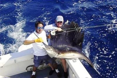 Żaglica - Kostaryka - www.przewodnicywedkarscy.pl - Wyprawy na ryby