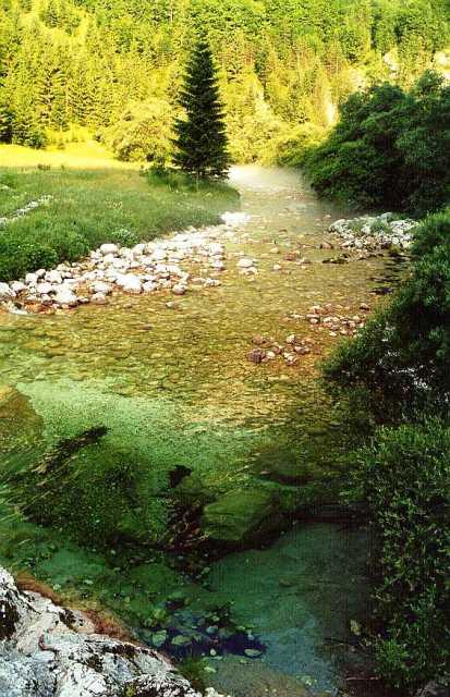 Rzeka Lepena - Słowenia - www.przewodnicywedkarscy.pl - Wyprawy na pstrągi