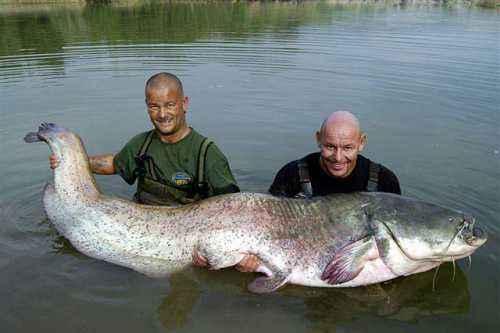Rzeka Ebro - sum - www.przewodnicywedkarscy.pl - Wyprawy na suma