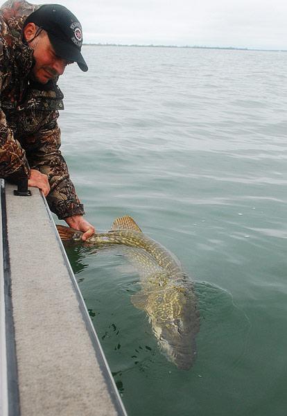 Catch and release - Rugia - Niemcy - szczupak - www.przewodnicywedkarscy.pl - Wyprawy wędkarskie