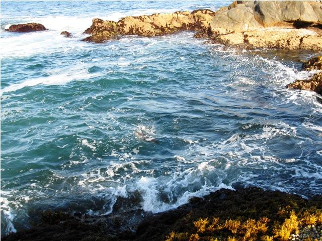 Oman - Hasik (Salalah) - Morze Arabskie - wyprawy wędkarskie - www.przewodnicywedkarscy.pl