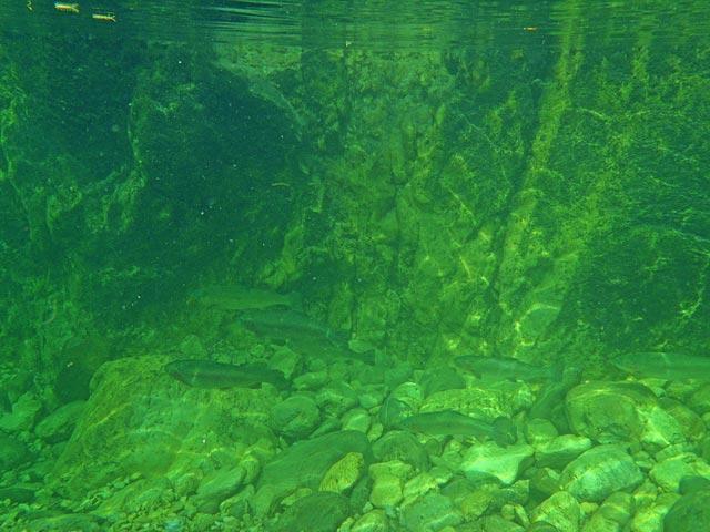 Głęboka rynna na Trebuscicy - Słowenia - Łowienie na muchę - www.przewodnicywedkarscy.pl - Wyprawy wędkarskie